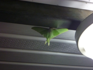 This massive moth was our porch companion all night.  Tamara was a little skttish at that end of the table.