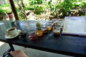 Coffee plantations serve you up a bunch of different coffees and teas as free samples in the hopes you will buy some. There are some really great coffees in there!