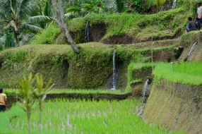 The path down led through a set of terraced rice fields. They have a pretty intricate system for sharing water.