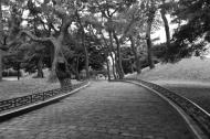 Park wanders.