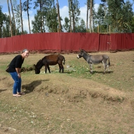 Ethiopia has a lot of donkeys. They are actually pretty entertaining.