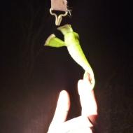 Reach for the sky little guy!